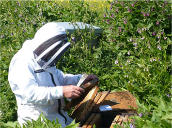 Diary of a Heather Hills Beekeeper: April and May - Heather Hills